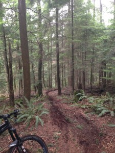 Getting through turns like this in the NW bike buddy train requires staying off the brakes too...